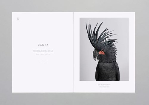 Birds 2 behance.net.JPG