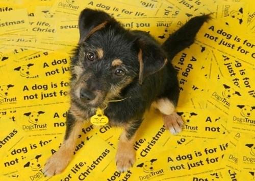 Dogs Trust theguardian com.JPG