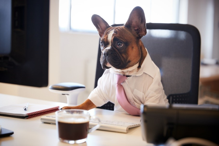dog sat at a desk in a suit and tie with a coffee